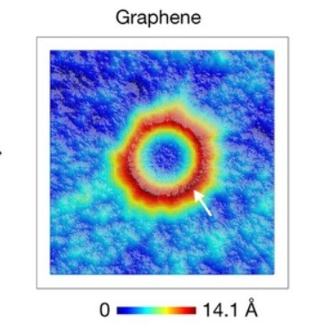 graphene_puckering