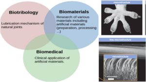 Biotribology