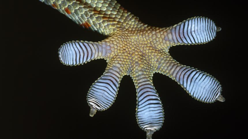 Geckohaftung: Kleben mit Elektrohärchen