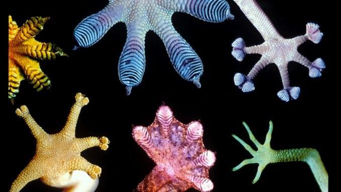 lizard feet
