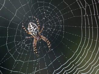 spider web green