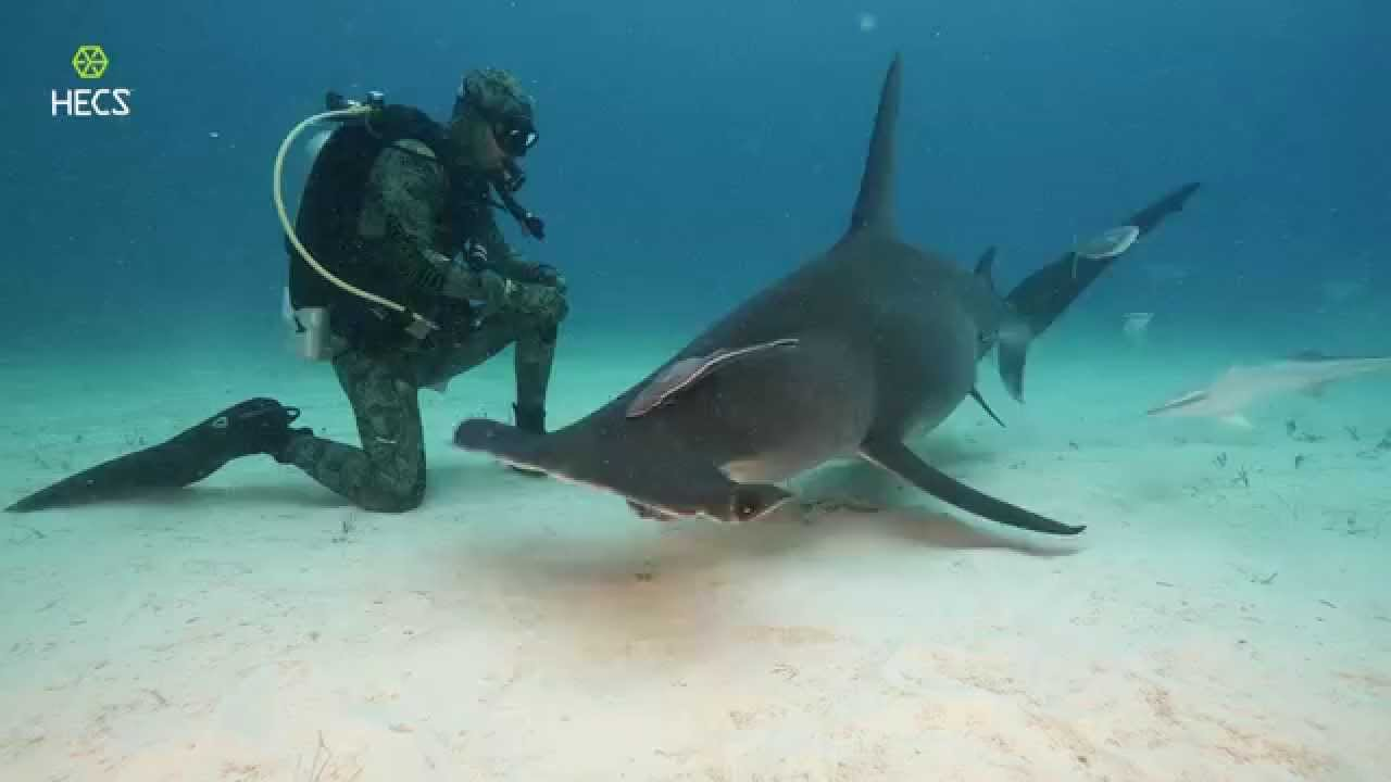 Image result for sharks and diving suits